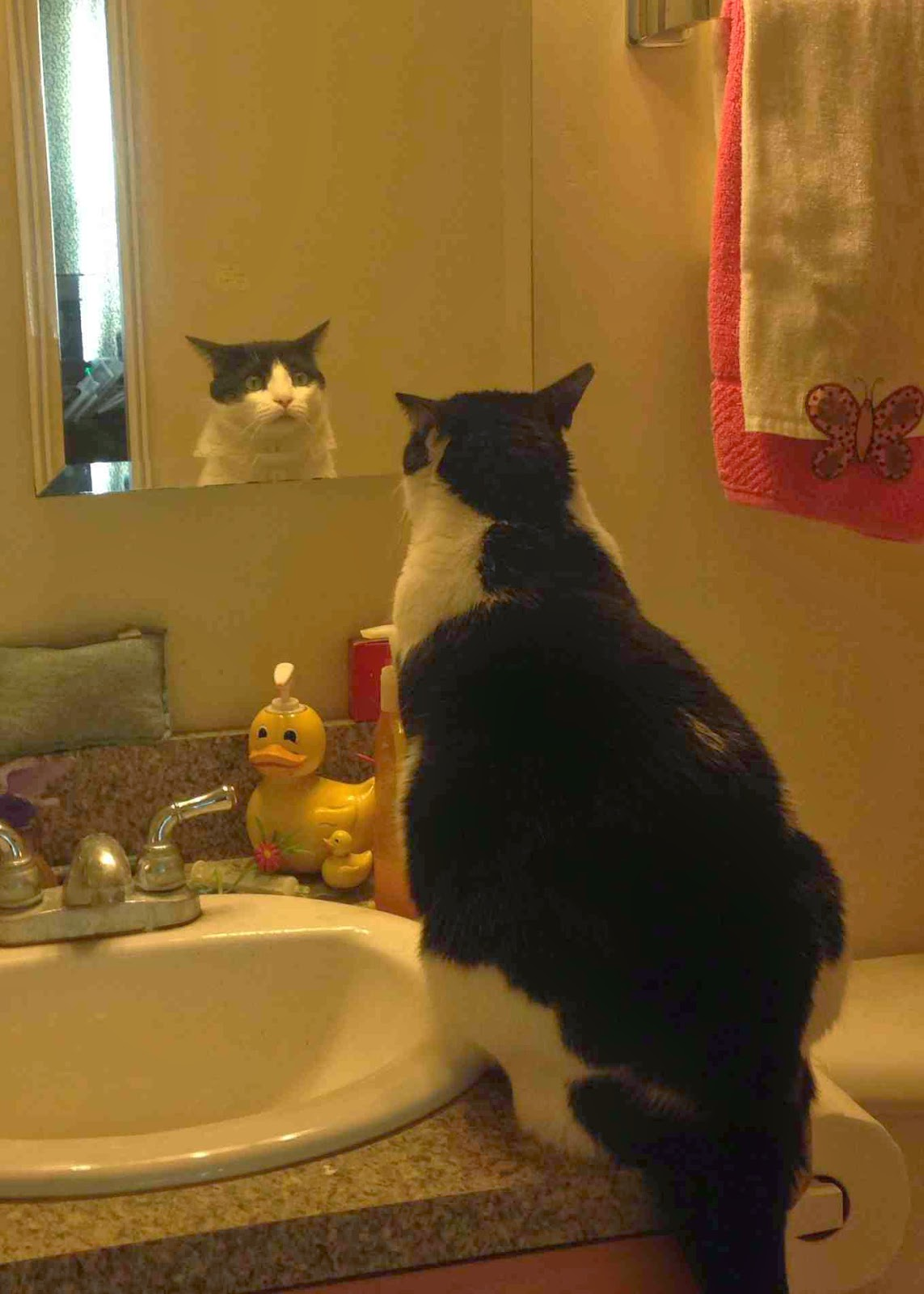 Funny cats - part 99 (40 pics + 10 gifs), cat pictures, cat looking into mirror