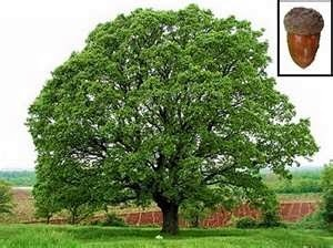 http://pixgood.com/iowa-tree.html