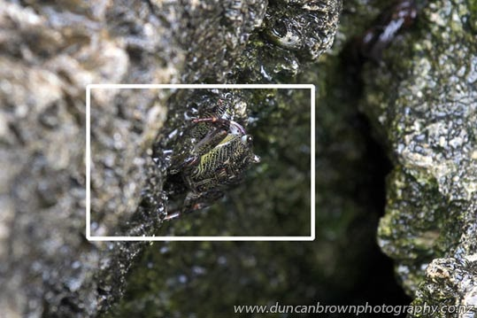 Camouflaged crustacean located photograph