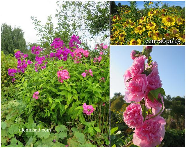 аленин сад, сентябрь, флоксы, гелениум, мальва