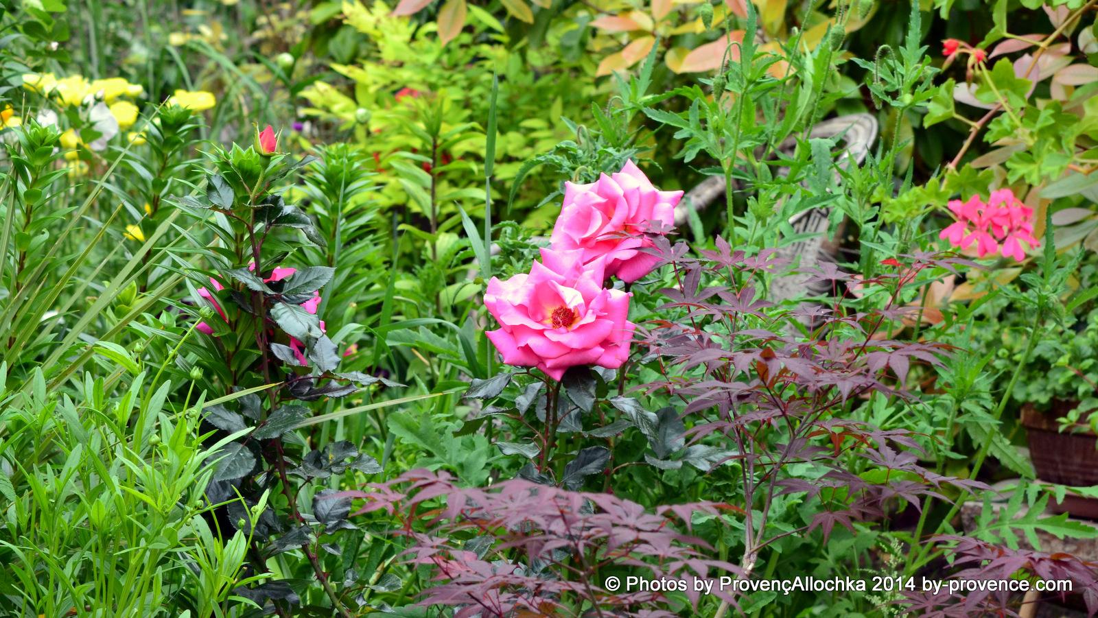 Reflets de St.Malo,rose,patio