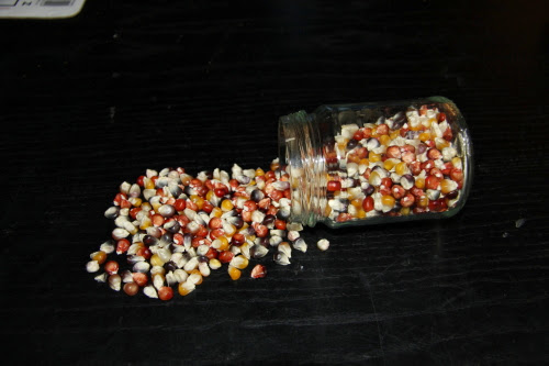 glass bead corn seeds for sale