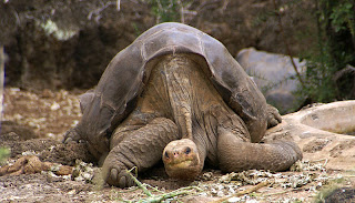 Lonesome George Wallpapers