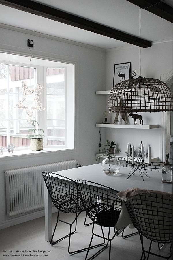 Ernst Kirchsteiger, diy, pyssel, hållare för hyacinter, hållare för lökar, stor ljusstake, jul, julpynt, julen 2015, matbord, gran i vas, advent, ljusstakar, julblomma, julblommor, inredning, inredningsblogg, bloggar, webbutik, webbutiker, webshop, interior, kök, köket, kökets, köks, bord, stolar, stol, svart, vitt, svart och vitt, svartvit, svartvita, stjärna ljusstake, skinn, skinn på stol, fäll, look alike, hylla, star, nettbutikk, nettbutikker, Oohh, julpynt 2015