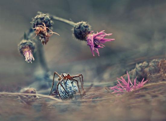 (Nature & Wildlife - Krasimir Matarov, Bulgaria)