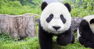 Cuidado con Google Panda y el linkbuilding spam