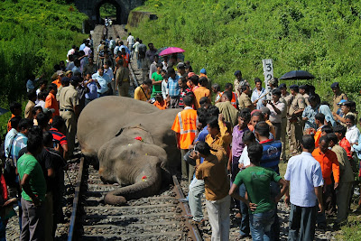 India:Express train kills 40th elephant in less than 10 years as calls are made to restrict speed limits on the notorious stretch of line