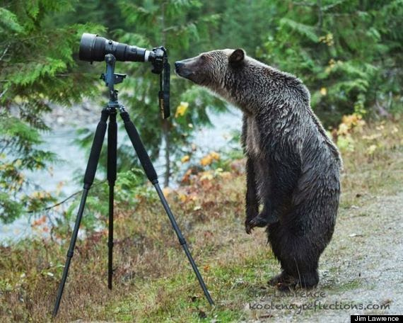 Grizzly camera pic