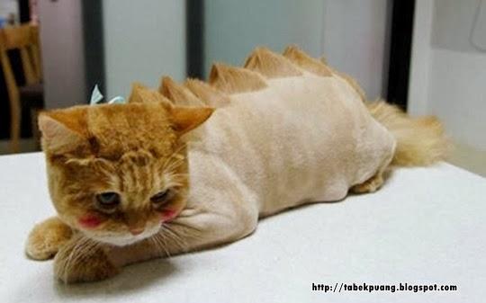 Gambar Kucing Ganas godean.web.id