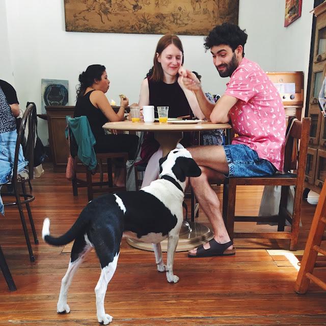 perro pidiendo comida en OSlo