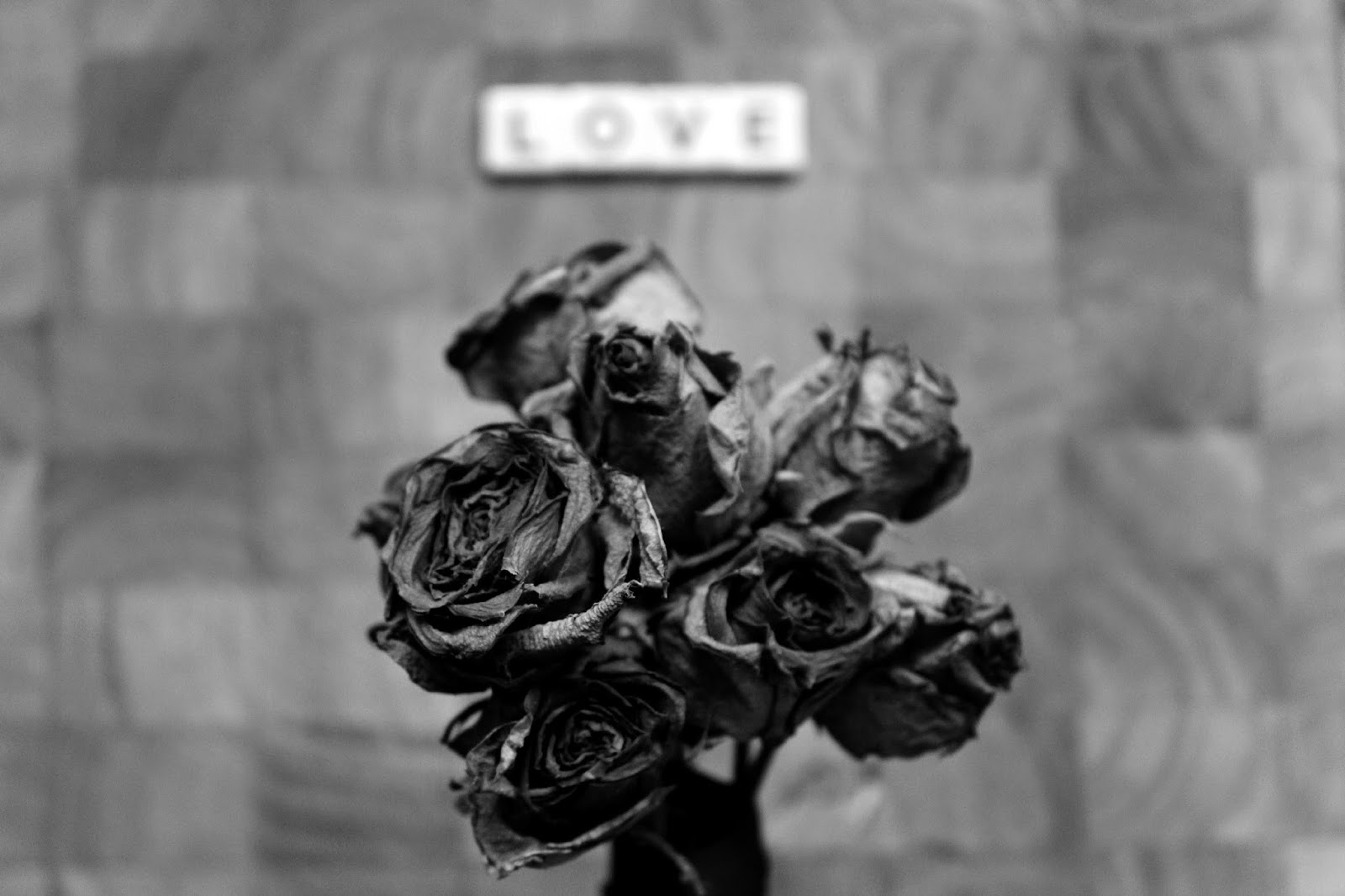 Roses for Black & White Photography Project  // 76sunflowers