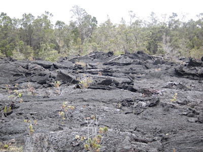 forest and lava, Hawaii