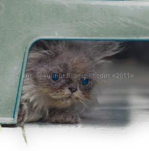 Gonzales, kucing imut, kucing lucu,  kucing aneh,  kucing botak, menyapih anak kucing, susu kucing