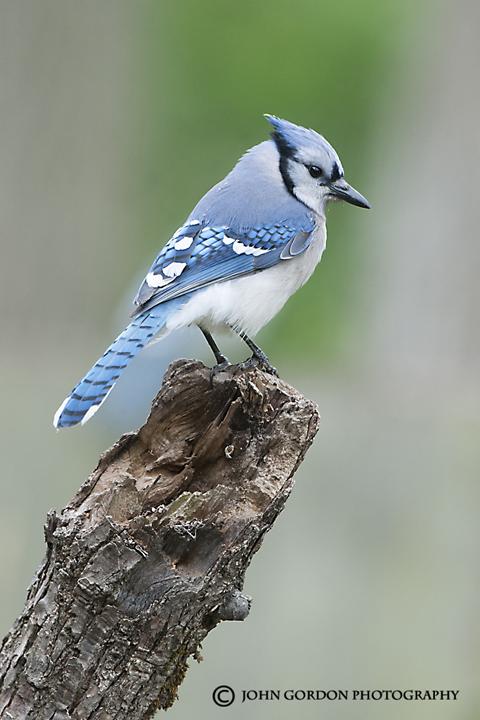 John Gordon Listening To Birds Ontario 2113 Roadtrip Summary