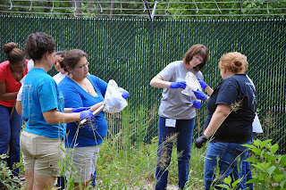 Teachers use nets to capture insects at STAFS.
