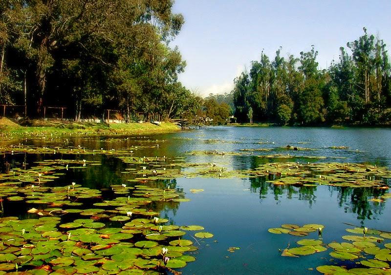 Kodai Lake Tamil Nadu, Kodaikanal