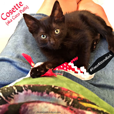 Richmond SPCA foster kitten Cosette Chronicles of Cardigan