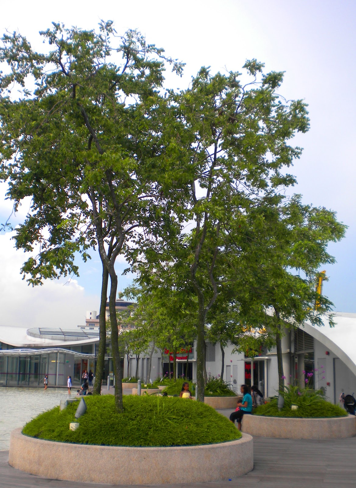 Landscapeurban greenery for Best small shade trees