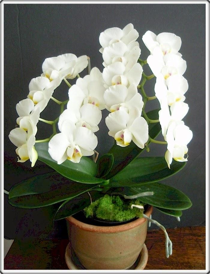 Ljepota i egzotika orhideje - Moj Vrt Cvijeća