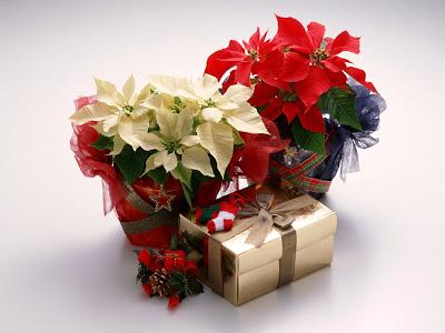 florist gift flower