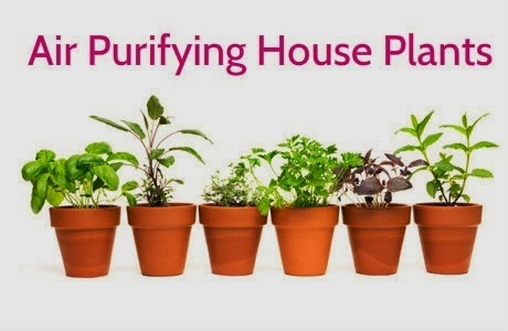 10 Best Plants to Grow Indoors for Air Purification