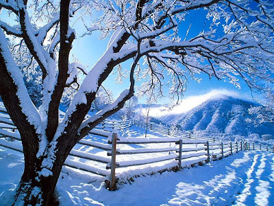 Best Free Winter wallpapers