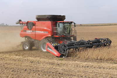 Combining soybeans in September