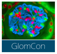 The Glomerular Disease Study & Trial Consortium (GlomCon)