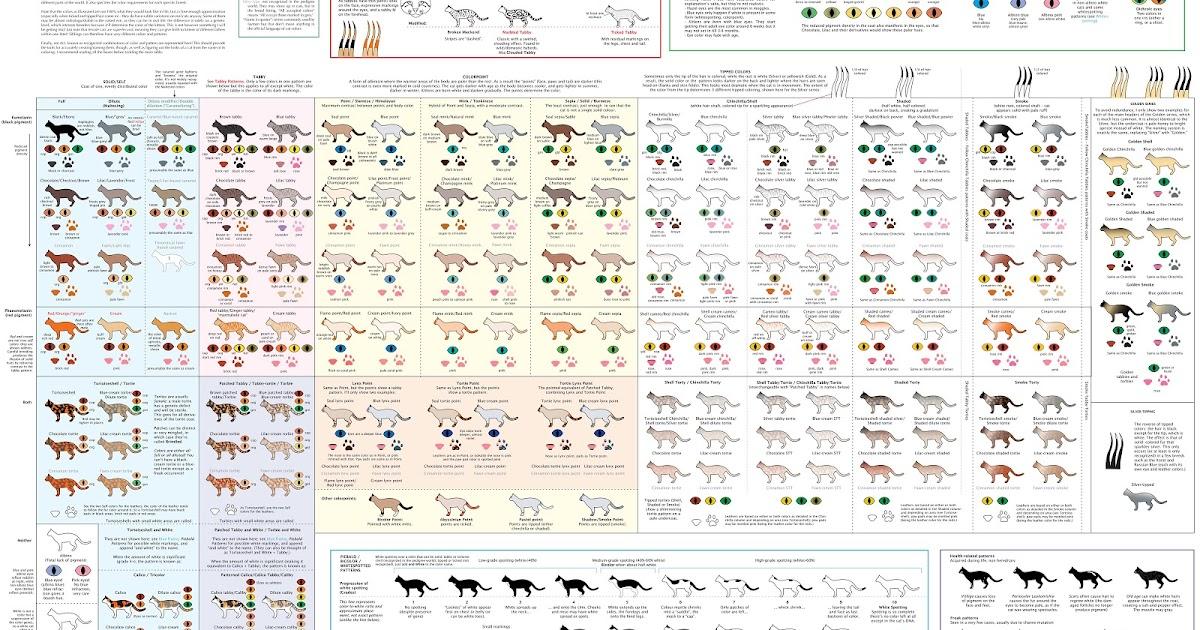Lindhavens Devon Rex Colours