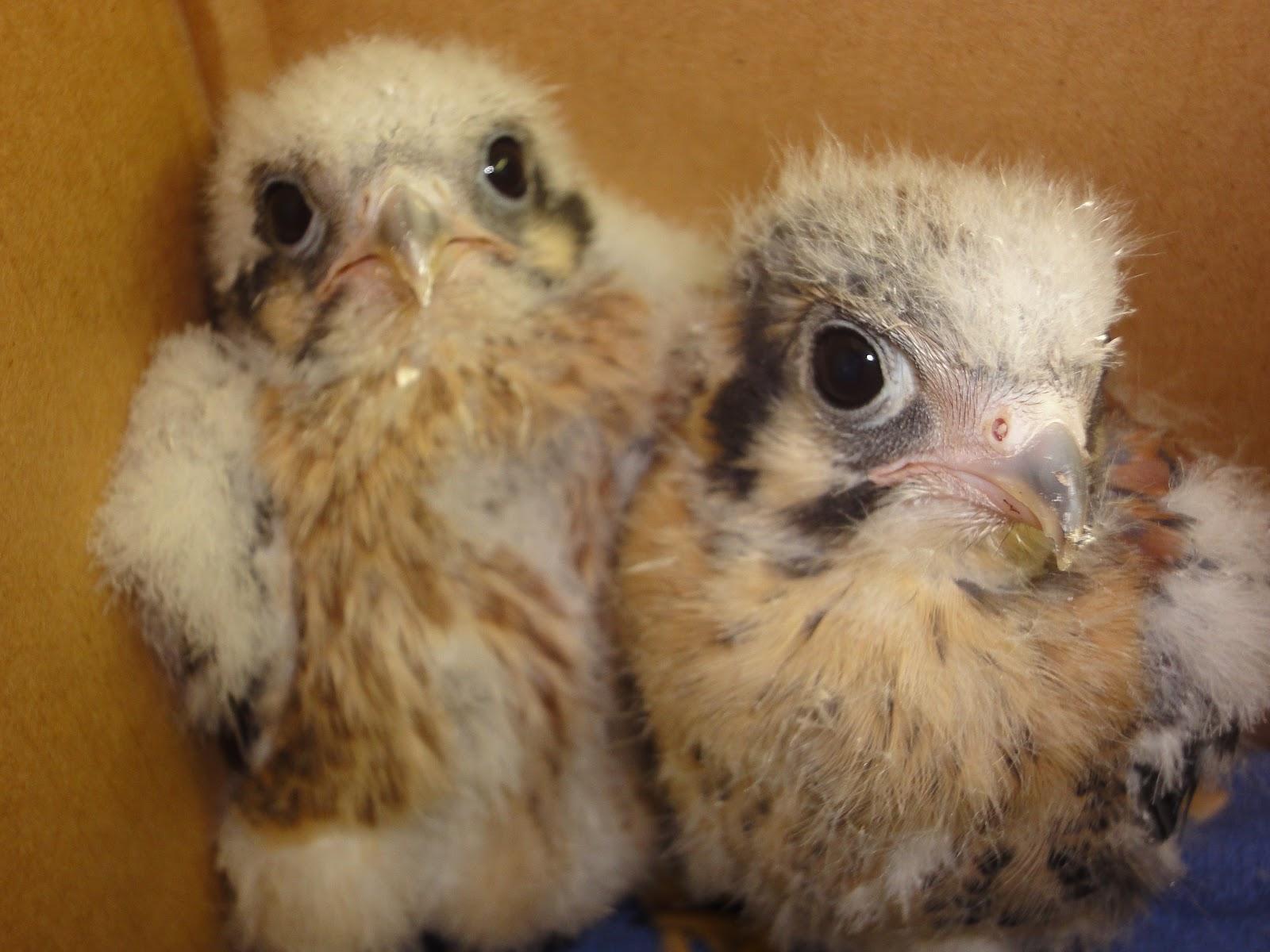 Taking Flight: A Very Birdy Baby Shower & Meet the Interns