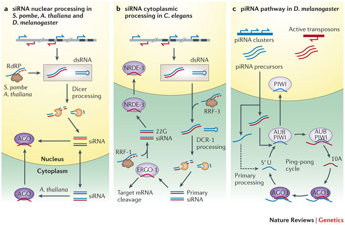 Nature Review Rna Editing
