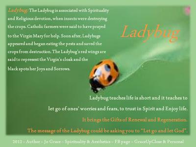 Grace Up Close Ladybug Showed Up Today