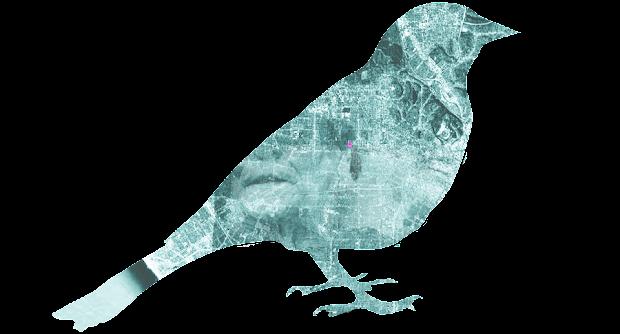 AZUL BIRD