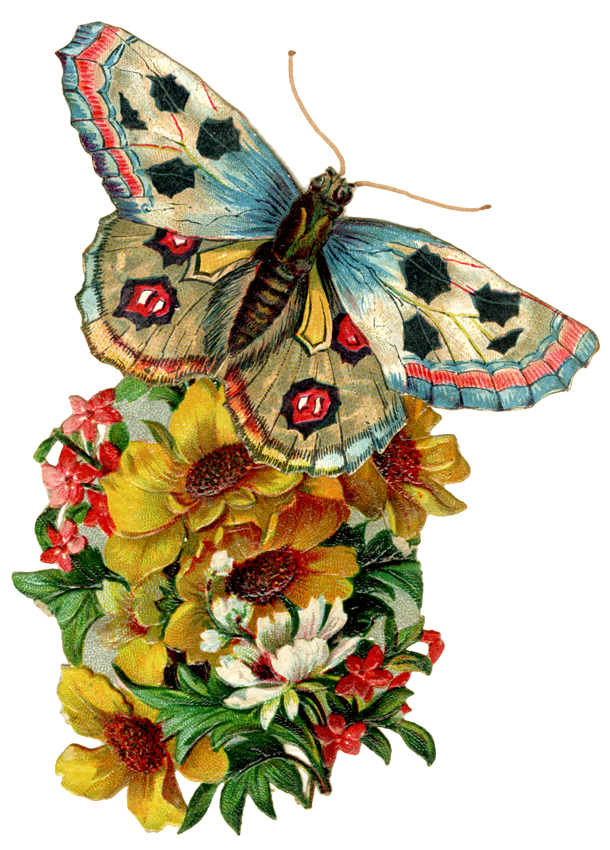 Here's a little vintage pret ty for you today…just click on the ...: thecottagemarket.com/2013/02/graphic-of-day-vintage-butterfly.html