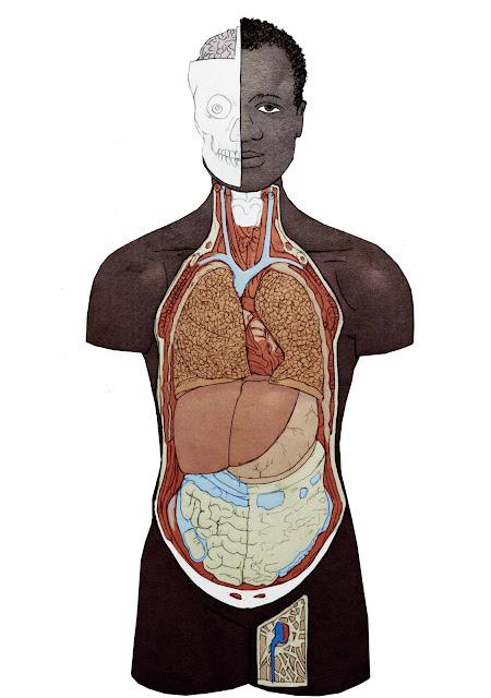 cuerpo humano, anatomia, negro