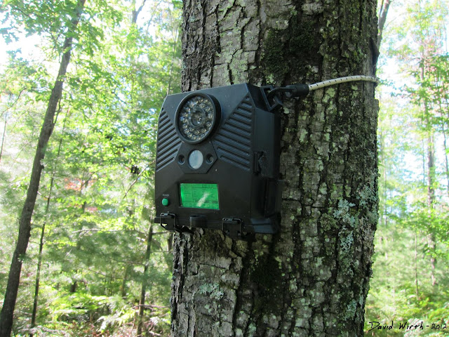 deer cam, trail cam, setup on tree, strap, how to, infrared, night