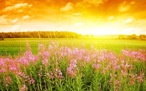 Flores de Verano - Summer Flowers (1920x1200)