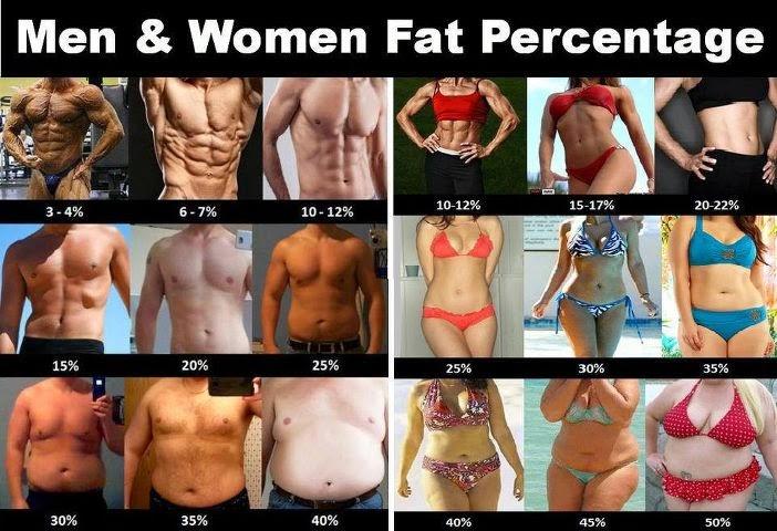 zawartość tkanki tłuszczowej w organizmie