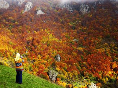 Otoño Colores Montañas y Arboles