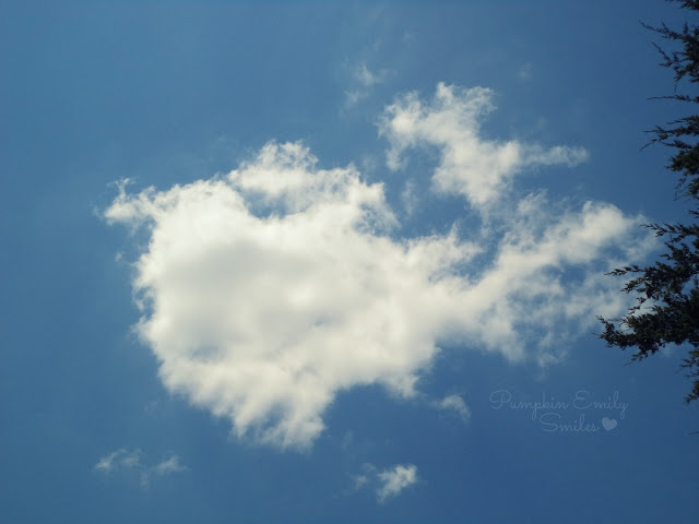 Clouds that look like a frog and a toucan