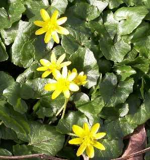 Hierbas medicinales plantas medicinales f for Planta decorativa con propiedades medicinales crucigrama