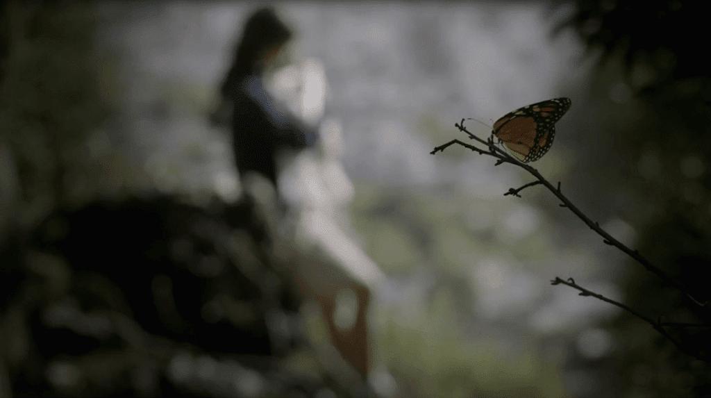 mariposa-butterfly-kelebek