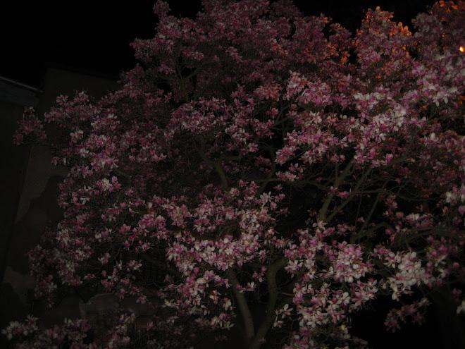 éjszakai virág