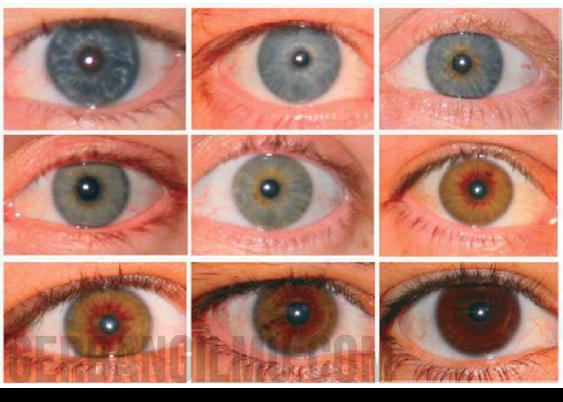 Warna warna mata (bagian iris)