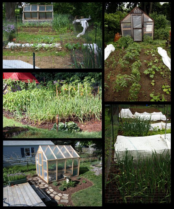 The Backyard Farming Connection: Homestead Highlight: Rob