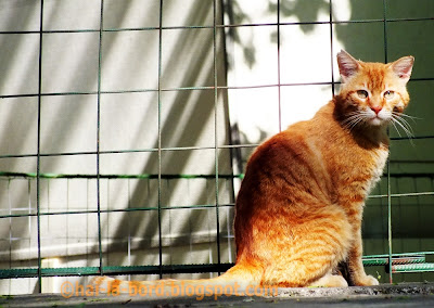 pisica galbena langa moschee eroii revolutiei
