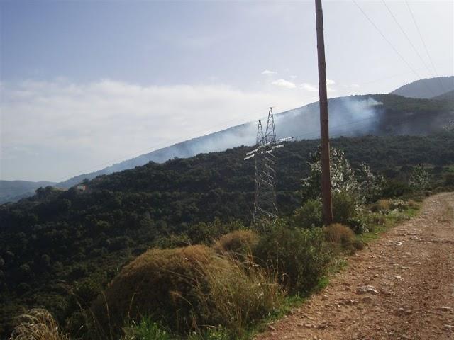 150 στρέμματα αποτέφρωσε πυρκαγιά στους Μύλους...