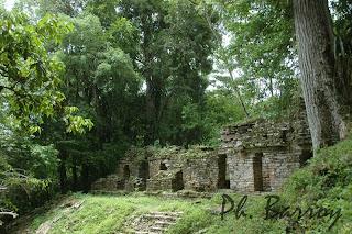 Paysages Mexique chiapas Yaxchilan Pyramide blog photo voyage