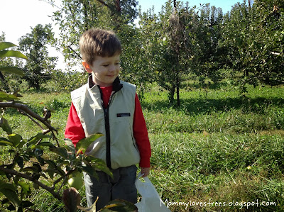 Fall outdoor apple activities|Mommy Loves Trees + plus why we all need trees.