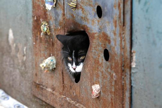 Minsk Belarus cat
